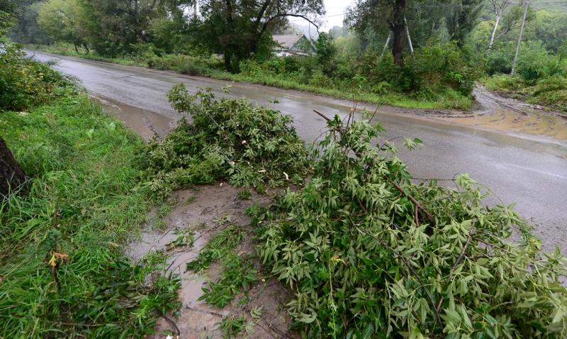Сильна негода на Тячівщині ламала дерева. Рятувальники розчищали шляхи всю ніч