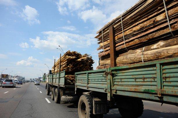 Москаль виявив корупційні схеми з вивезення лісу закордон Держагентством лісових ресурсів