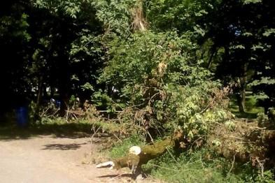 """В ужгородському """"Ротарі-парку"""" впало дерево, зачепивши дроти"""