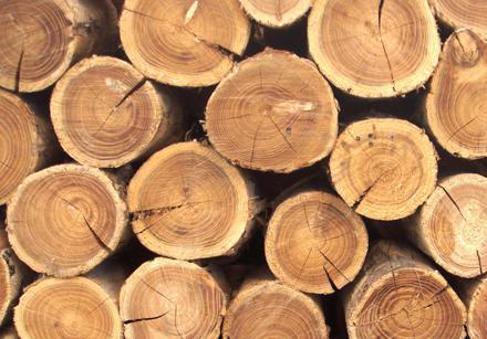 Замість колотого дуба та бука закарпатські бізнесмени експортували граба