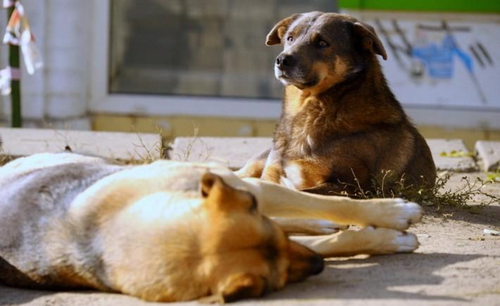 В Ужгороді потруїли собак. Тварини померли в муках, – активіст