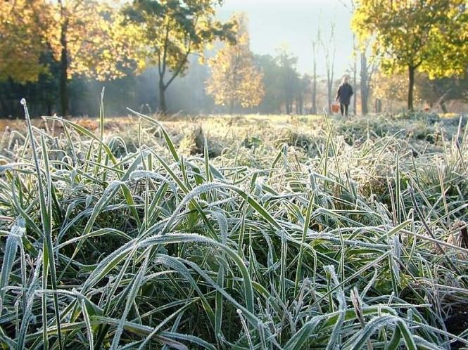 В Україні очікується значне похолодання та перші заморозки. Але Закарпаття циклон омине