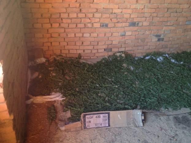У Новому Давидкові, що на Мукачівщині, чоловік сушив 6 кілограм наркотиків
