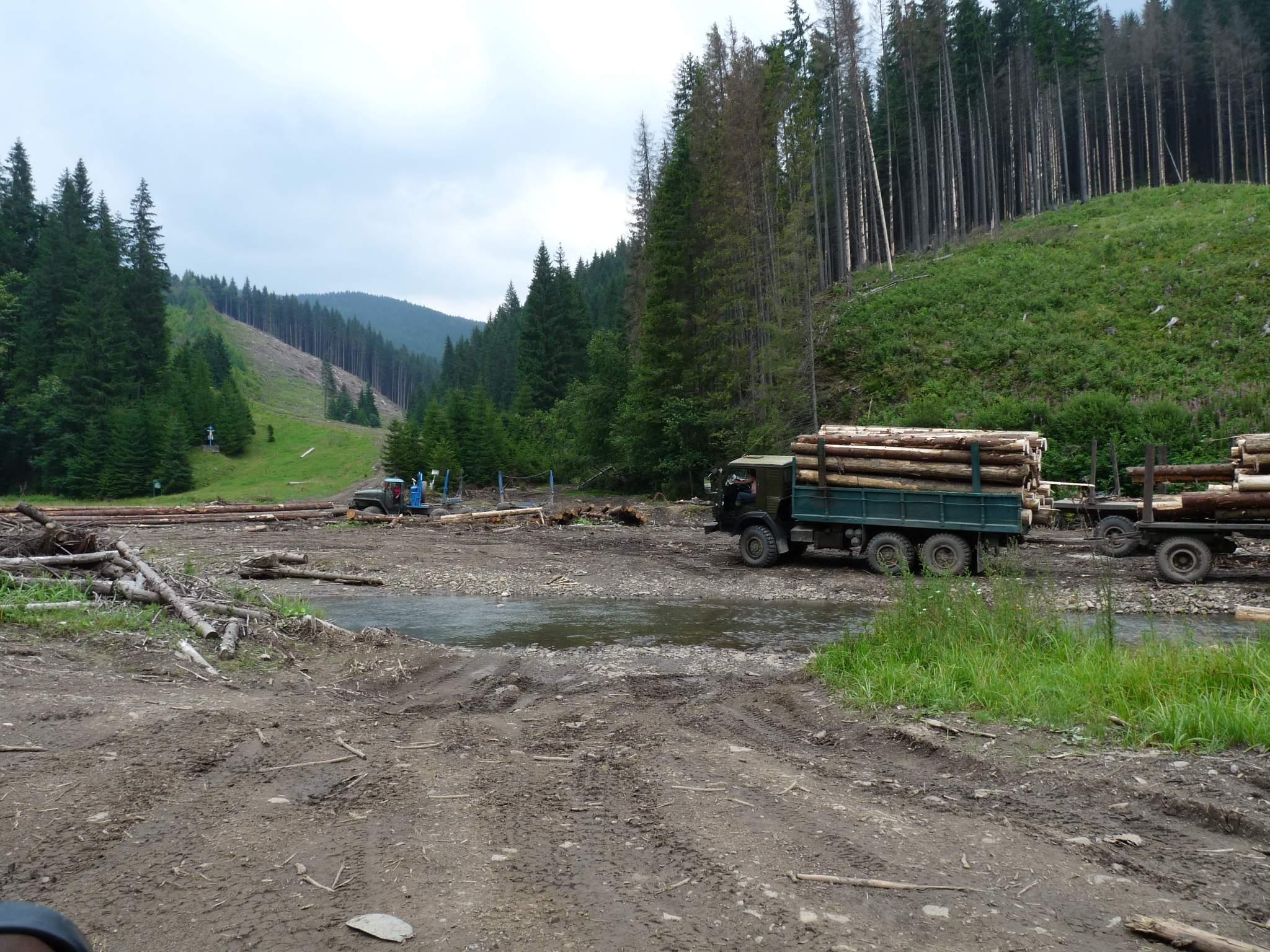 """Мешканці Міжгірщини, які вчинили незаконну поруку дерев у Нацпарку """"Синевир"""", будуть відповідати перед законом"""