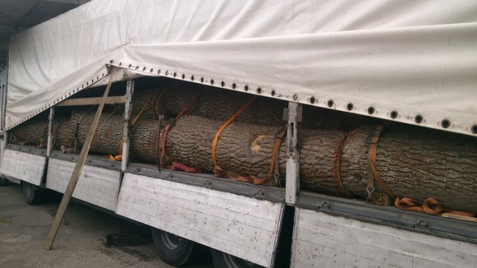 На Тячівщині правоохоронці зупинили вантажівку з деревиною