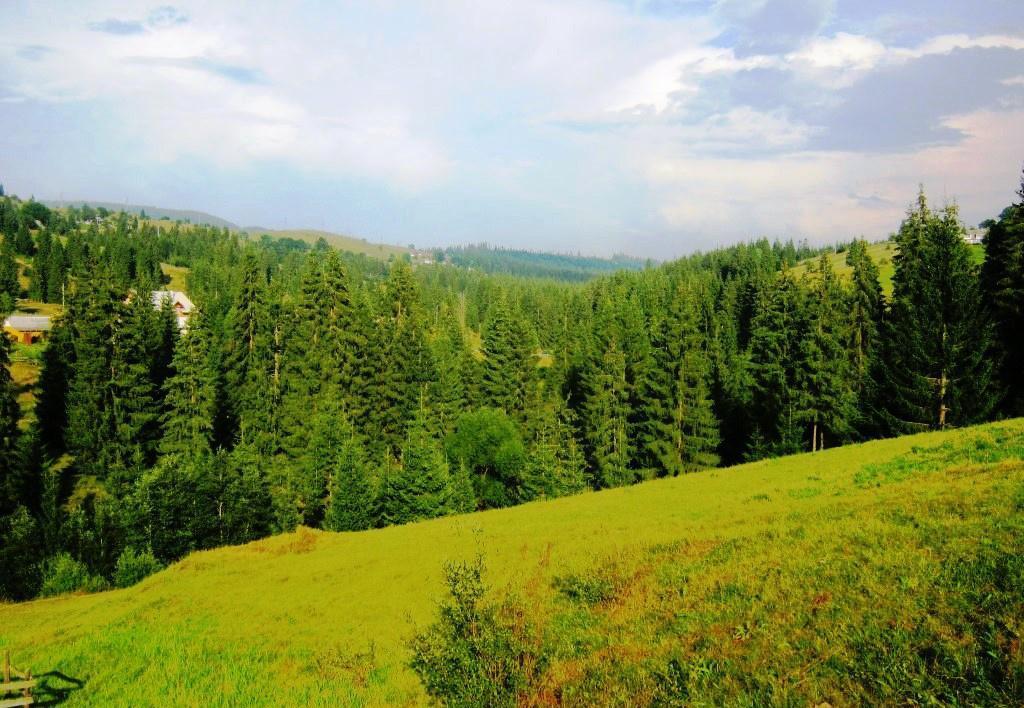 Ділянку вартістю близько 14 мільйонів гривень повернули державі