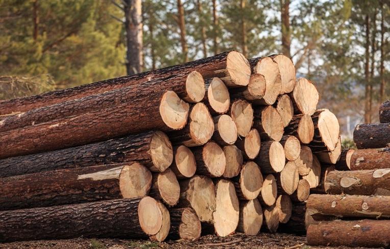 Хто краде та рубає наш ліс?
