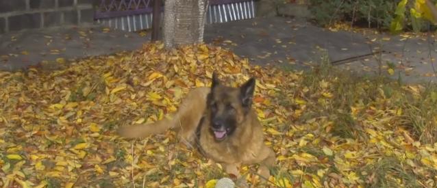 В Ужгороді з'ясували, чому отруюють собак