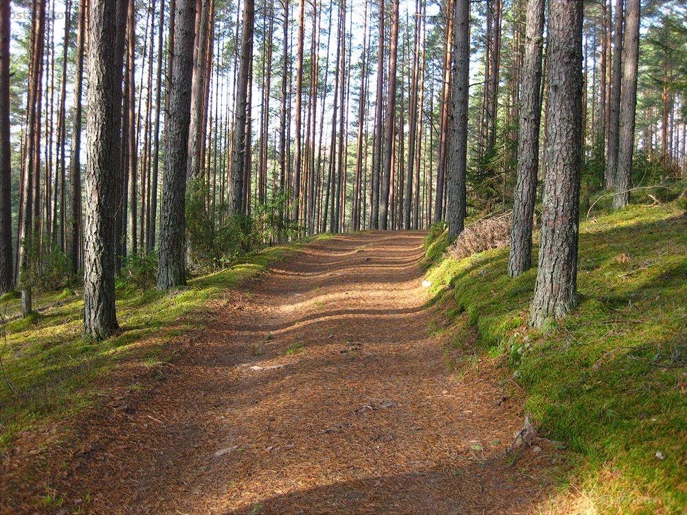 """Службові особи управління лісових агропромислових господарств перерахували понад 140 тис грн за ремонт """"лівих"""" лісових доріг"""