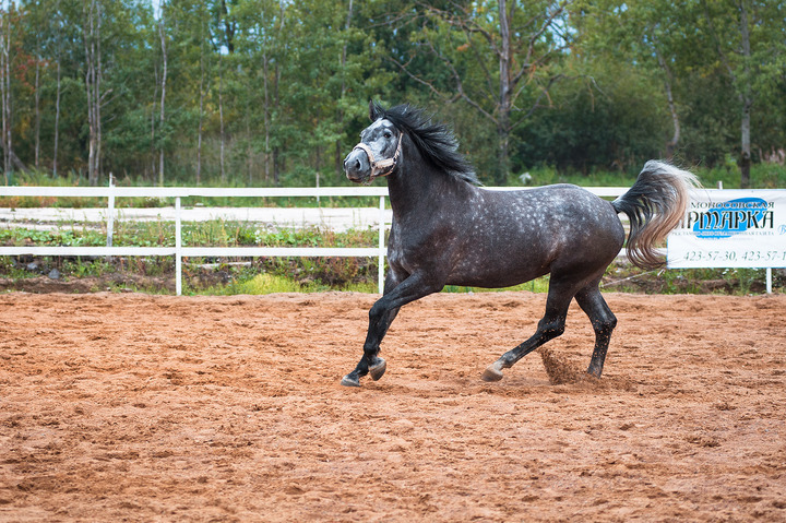 22-річний житель Хустщини вкрав у своїх односельчан двох коней