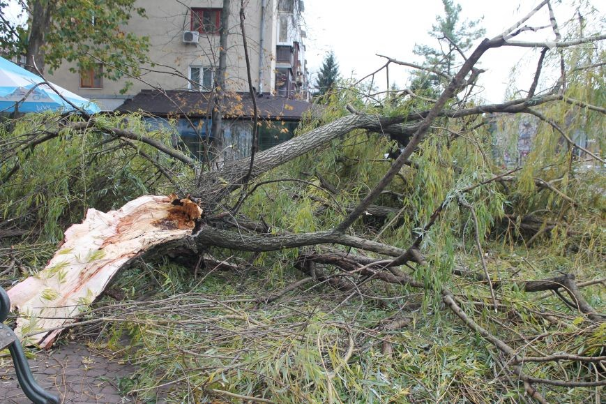 В Ужгороді негода повалила частину дерева на пішохідну зону