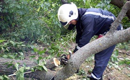 На вулиці Ярослава Мудрого у Мукачеві впало дерево