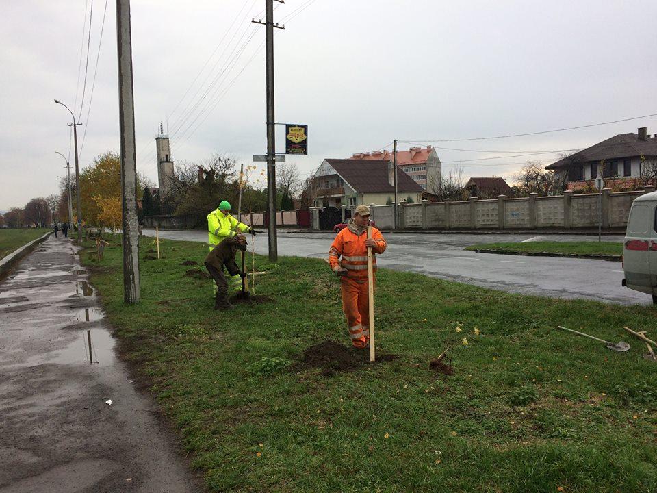У Мукачеві висаджують нові дерева