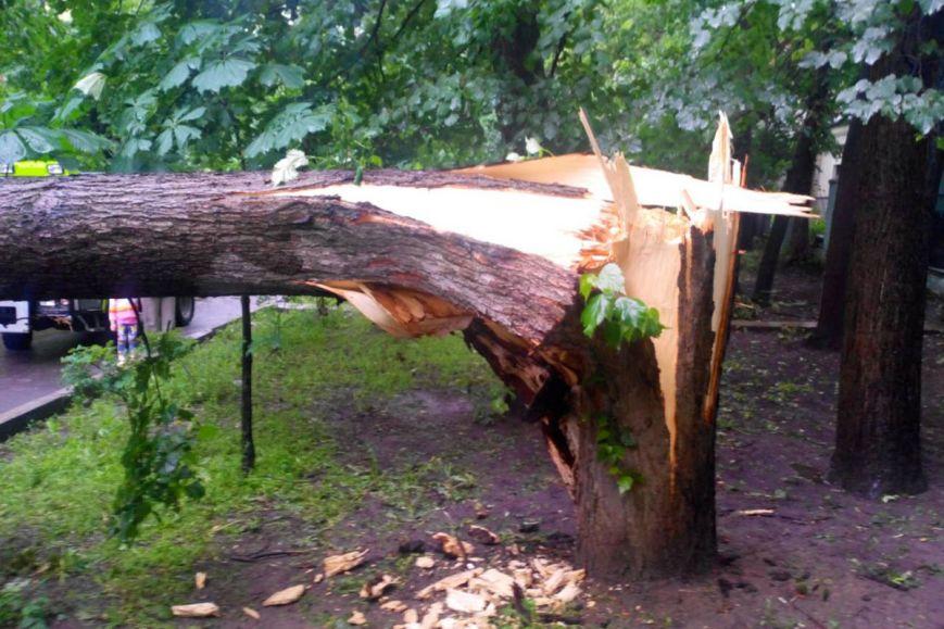 В Ужгороді прооперували 12-річну школярку, на яку сьогодні впало дерево