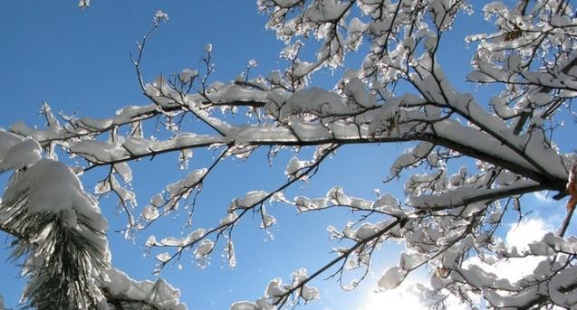 На Закарпатті відчутно потепліє: подекуди до +12°