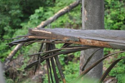 З десяток дерев на Студентській набережній в Ужгороді аварійні