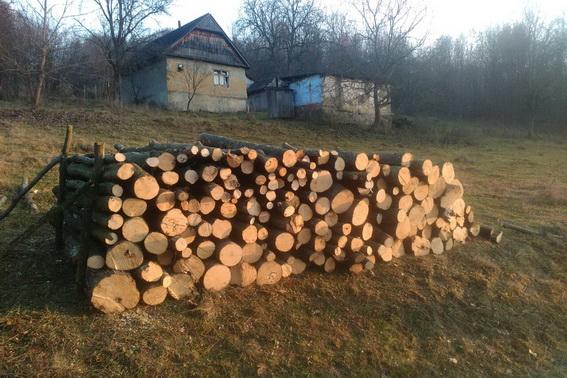 Правоохоронці зловили чоловіка, який незаконно вирубував ліс