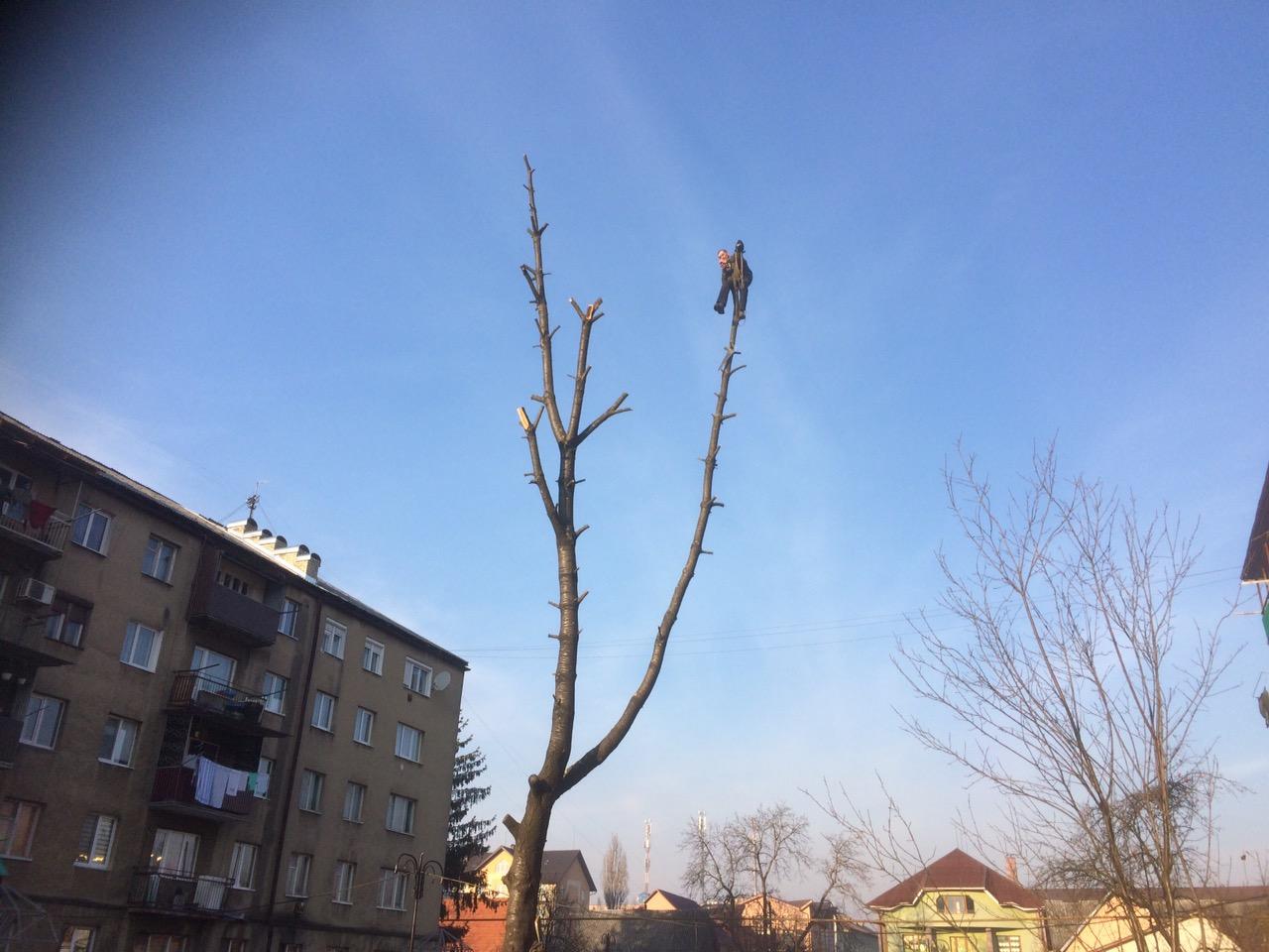 Тячівські рятувальники допомогли місцевому мешканцю спуститися з 15-метрового дерева