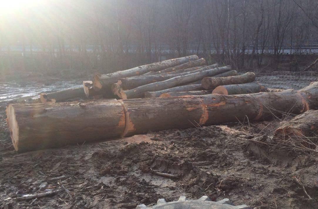 Група робітників без жодних дозвільних документів вирізали ліс відразу при трасі Київ-Чоп
