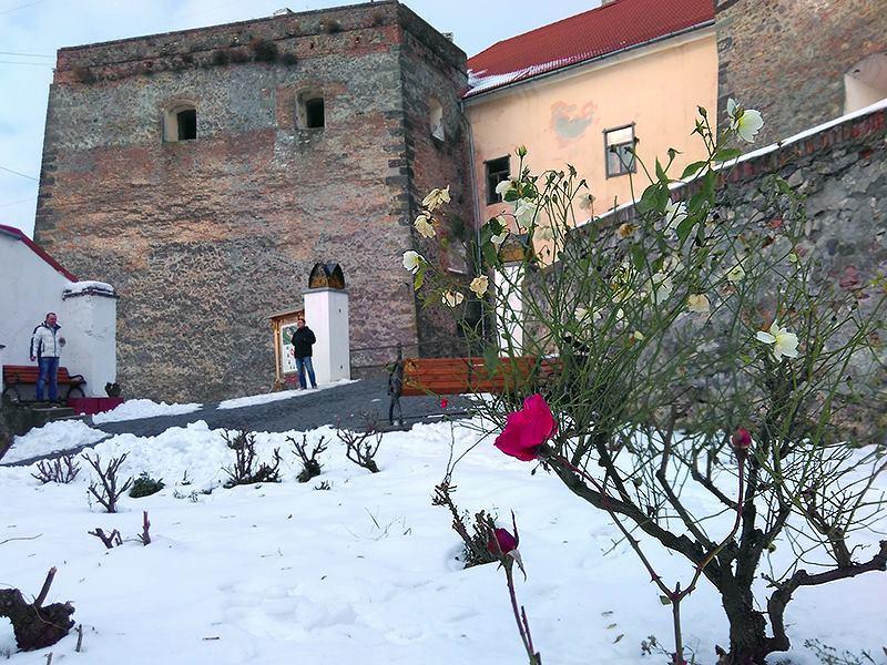 """Диво природи у Мукачеві: у замку """"Паланок"""" зацвіли троянди"""
