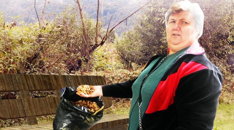 """""""На одному дереві можна заробити до 120 доларів"""", – господар про бізнес на """"царських плодах"""""""
