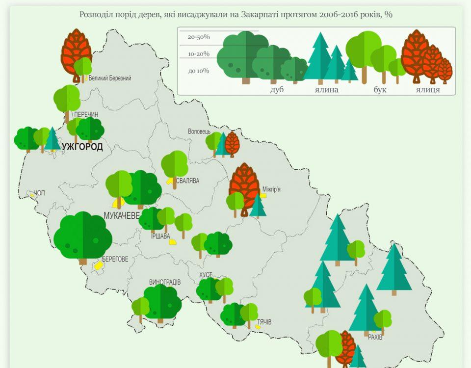 Як на Закарпатті відновлюють ліс