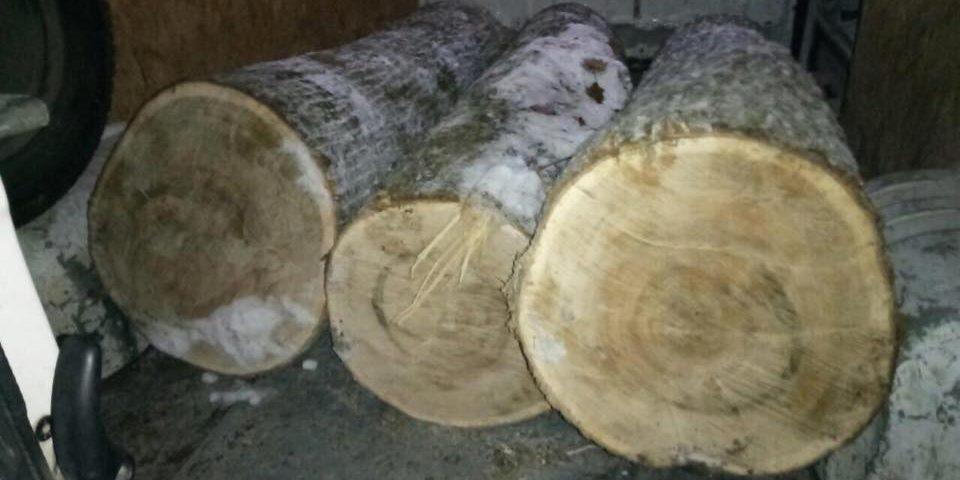 Крадії лісу, щоб їх не впіймали, тікали від охорони по півметрових заметах, лишивши автівку з деревиною