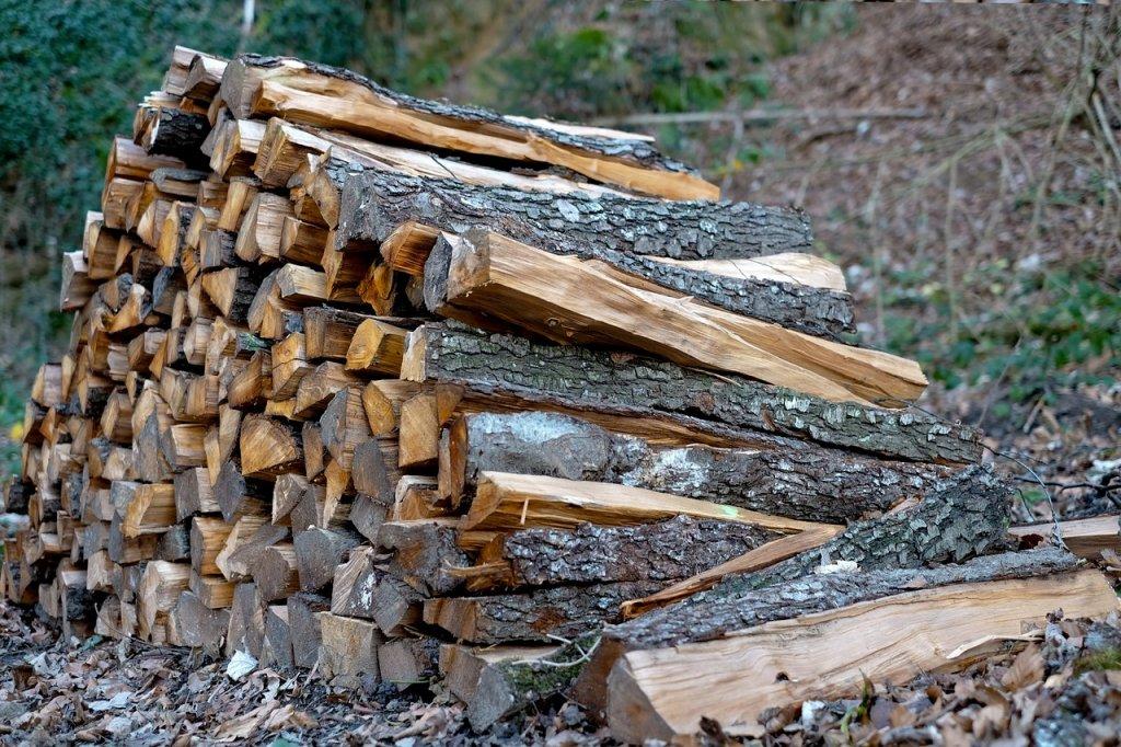 СБУ викрила злочинну схему продажу лісу: фальшиві документи підприємець друкував на звичайному принтері