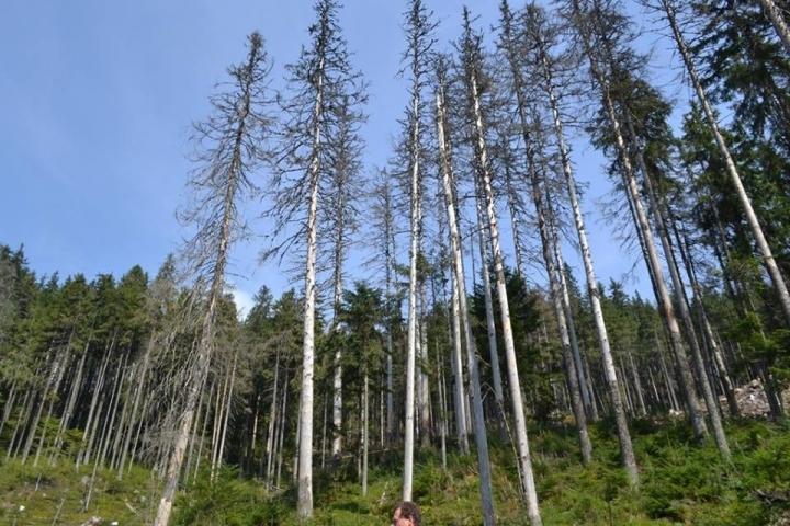 Лісівники Закарпаття обговорили питання вирощування посадкового матеріалу й лісовідновлення