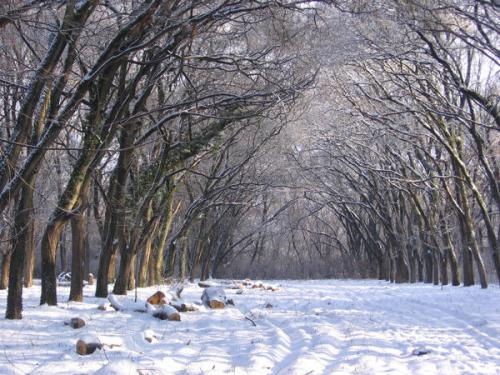 Ужгородська міськрада незаконно виділила фізичній особі земельну ділянку поблизу Боздоського парку