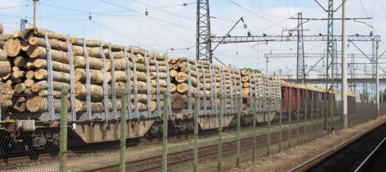 Підприємцю, котрий намагався вивезти у країни ЄС 11 вагонів лісу, прокуратура оголосила підозру