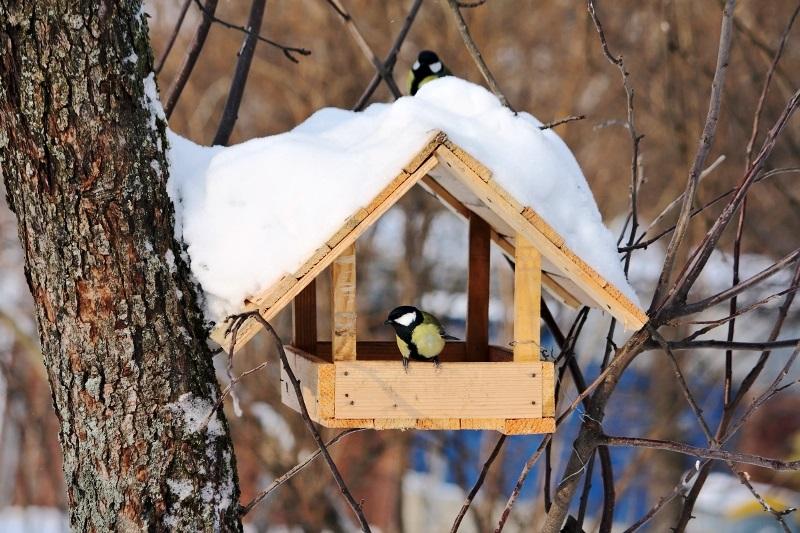 """Закарпатські лісівники закликають людей годувати пташок, а самі забезпечили пернатих """"соціальним житлом"""""""