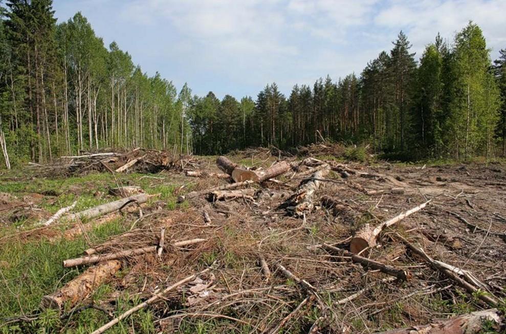 Закарпатця оштрафовано за незаконну вирубку лісу на Рахівщині