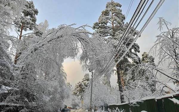 На Свалявщині дерево, що впало під мокрим снігом, залишило жителів 6 сіл без світла
