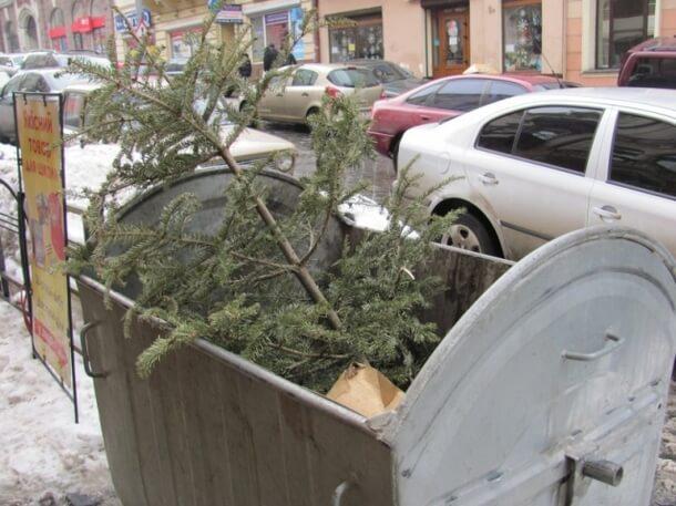 Влада Ужгорода просить виносити новорічні ялинки на контейнерні сміттєві майданчики