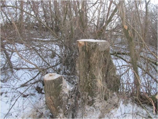 Закарпатські та угорські прикордонники викрили факт вирубки дерев на кордоні