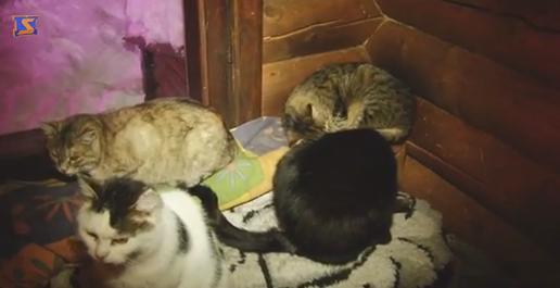 Котяче царство: в одному з туристичних закладів Закарпаття живуть більше 60 котів