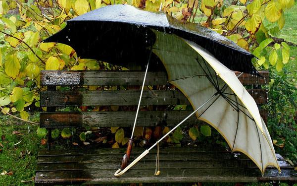 Незвична крадіжка в Ужгороді: двоє чоловіків поцупили з кав'ярні парасольки