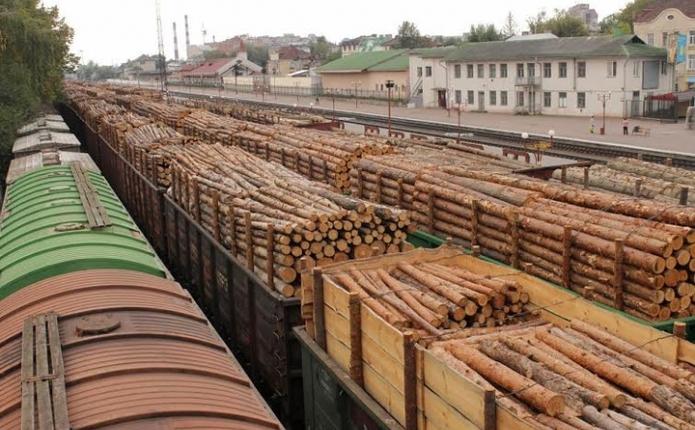 Підприємець із Мукачівського району намагався вивезти за кордон 11 вагонів лісу по підробленим документам