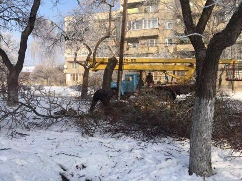 На одній із вулиць Мукачева вирізають старі дерева