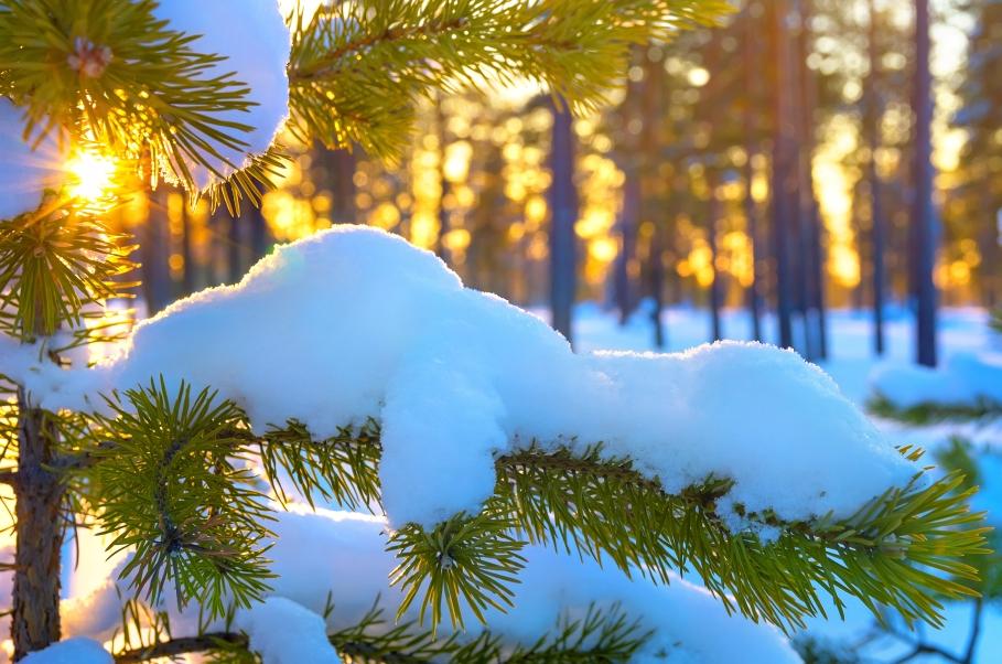 На початку лютого на Закарпатті очікують значне потепління