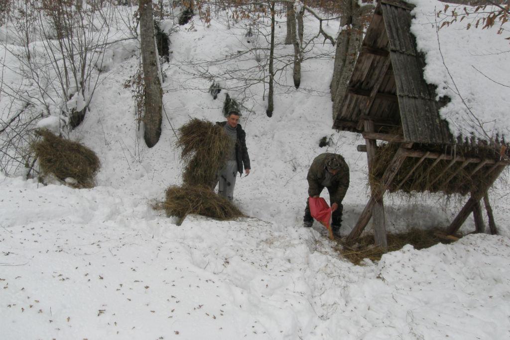 На Рахівщині посилили підгодівлю лісових мешканців