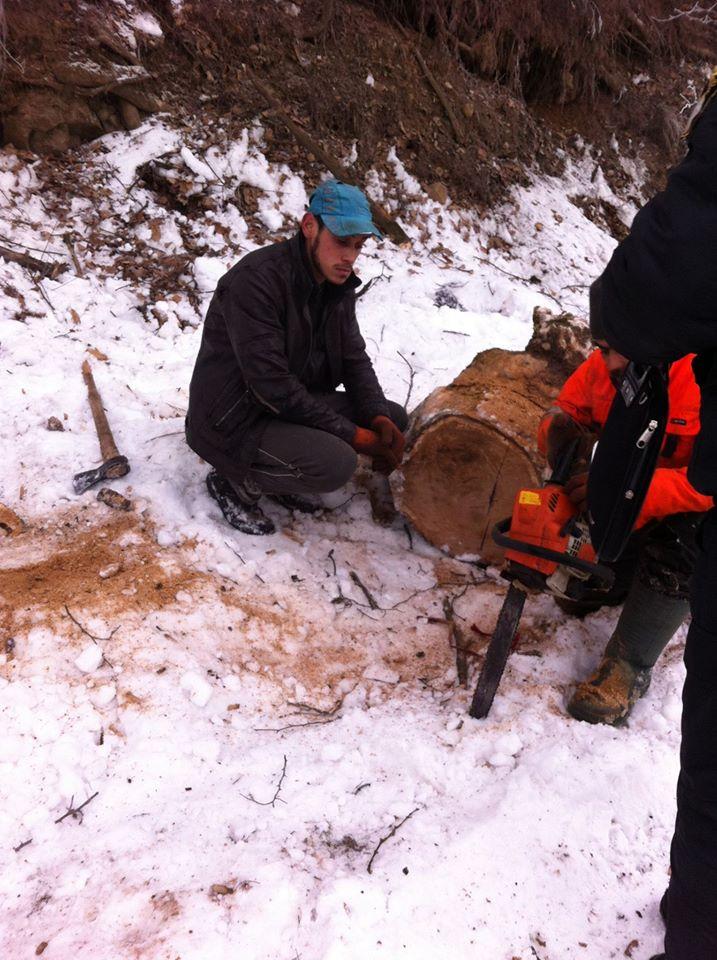 Муніципальна поліція Мукачева спіймала «на гарячому» осіб, які вирубували дерева