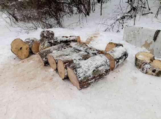 На Іршавщині у лісі чоловік самовільно вирубував дерева