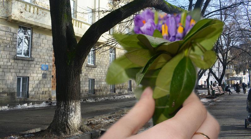 В Ужгороді вже продають перші весняні квіти