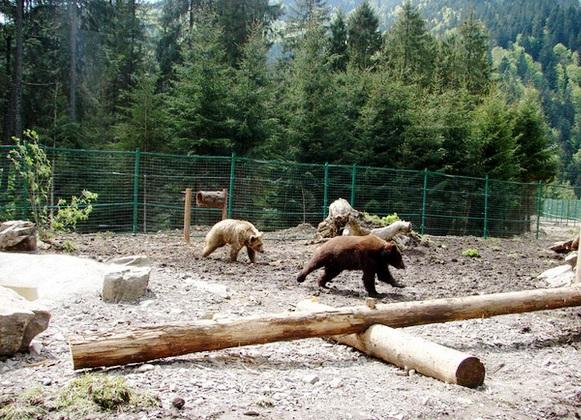 """До реабілітаційного центру """"Синевир"""" привезуть ведмедицю із Дніпра"""