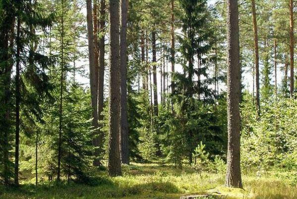 Закарпатські лісівники запевняють, що відкриті для суспільства