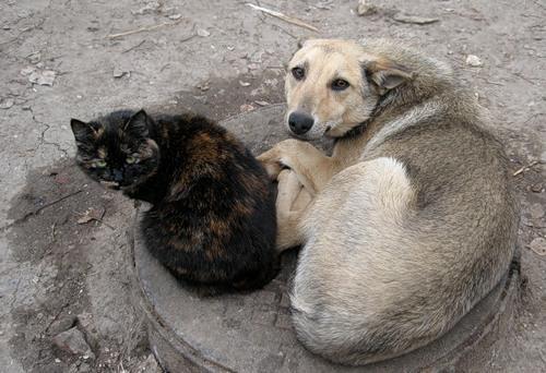 На відлов безпритульних тварин ужгородська мерія витратила майже 200 тисяч гривень. Але собак на вулицях не поменшало