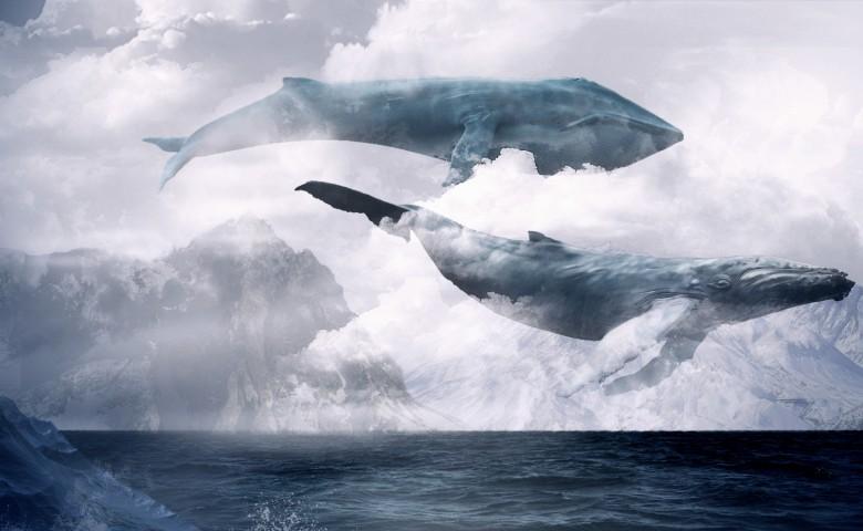 """Правоохоронці спростували версію щодо причетності гри """"Синій кит"""" до жахливого вбивства жінки дітьми у Хусті"""