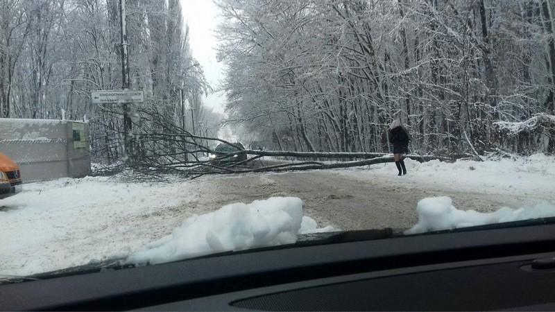 На одній із вулиць Ужгорода на дорогу впало дерево